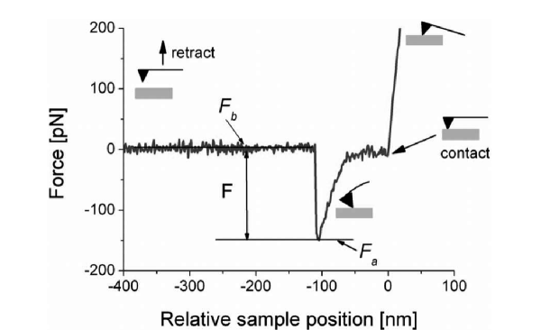 Example of the force curve recorded for the interaction of an antigen-antibody pair, showing a typical jump related to single molecule interaction. Reprinted with permission from [2]