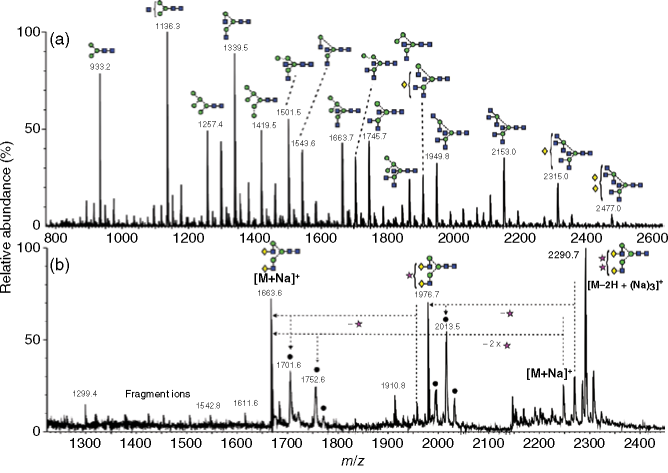 (a) Positive ion reflectron MALDI-TOF spectrum of N-linked glycans released with hydrazine from chicken ovalbumin