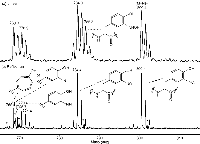 Photodecomposition pattern of the synthetic nitropeptid