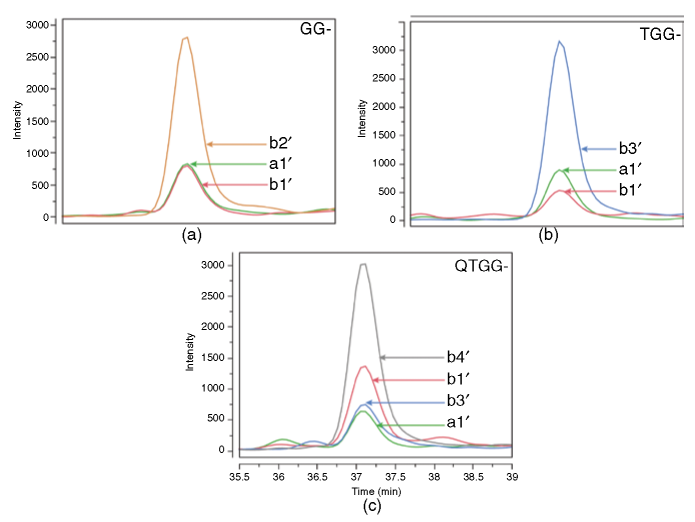 Postacquisition extracted diagnostic a'-type and b'-type product ions generated during SWATH acquisition of the synthetic isopeptides with the backbone sequence