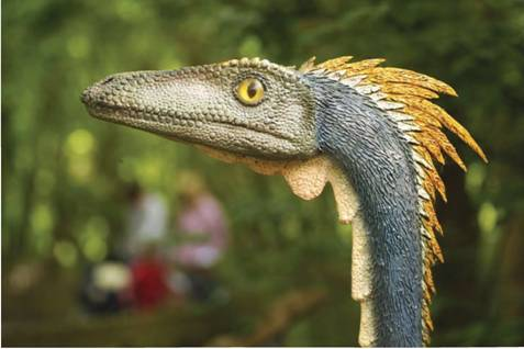 Restoration Of A Velociraptor Mongoliensis Very Bird Like Non Avian Dinosaur Therefore Also An Archosaur And Thus Sauropsid I E Reptile