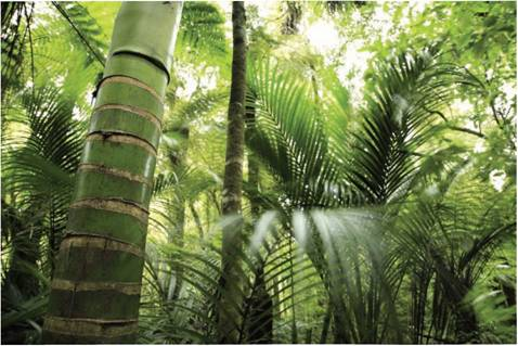 Jurassic period plants and animals - photo#54
