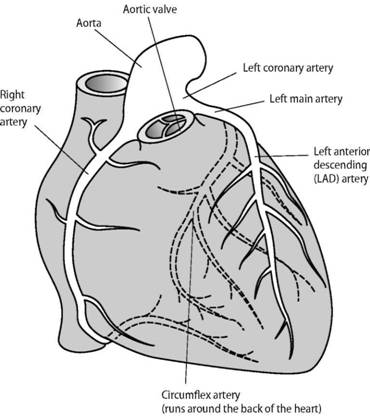 How your heart works, ANATOMY OF THE HEART, What is the heart?, Can ...