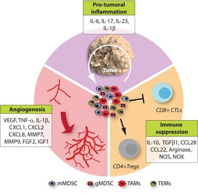 Tumor Microenvironment And Cellular Stress Academic